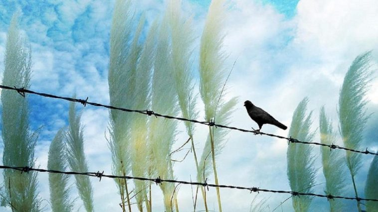 sky-nature-love-blue-four-colors-pretty-surreal-clouds-raven-breeze-seasons-beautiful-trees-fence-lovely-cool-wallpaper-night-1366x768